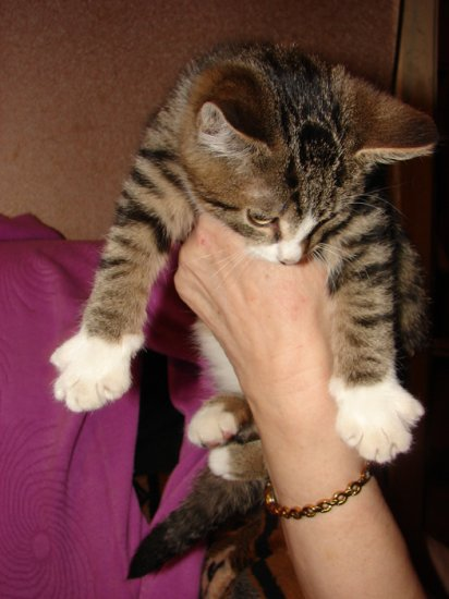 Не забудьте погладить кошку!