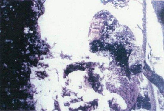 Снежного человека засняли на пленку