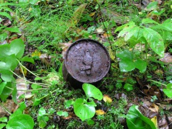 Интересные вещи в лесах Эстонии