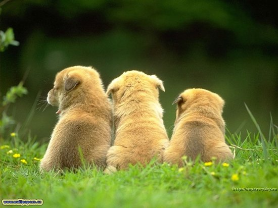 Милые зверюшки