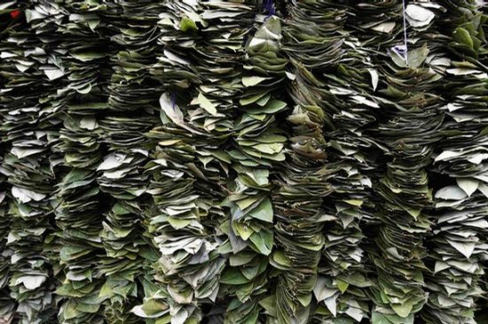 Перу и Боливия выступили в защиту листьев коки