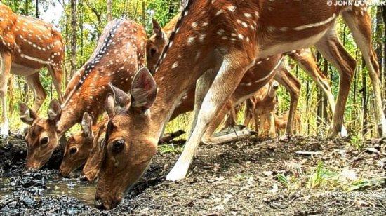 Действительно уникальные кадры дикой природы
