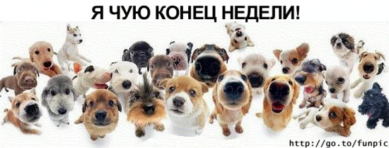 Собачковый позитив