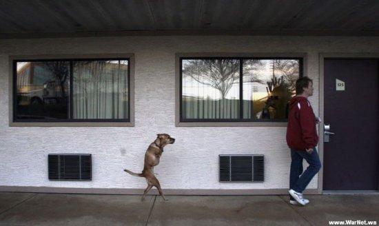 Собака ходит на двух лапах