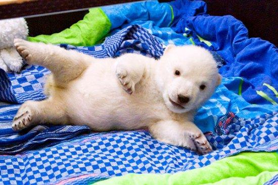 Маленький белый медвежонок