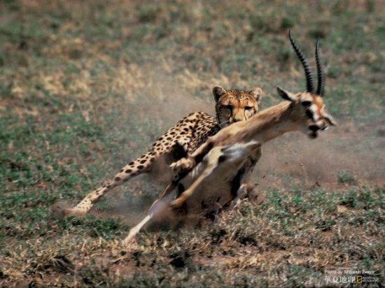 Большая охота