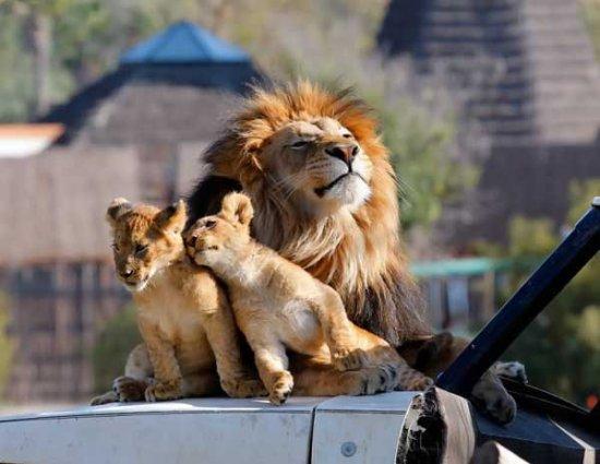 Мама, папа, я - царская семья!