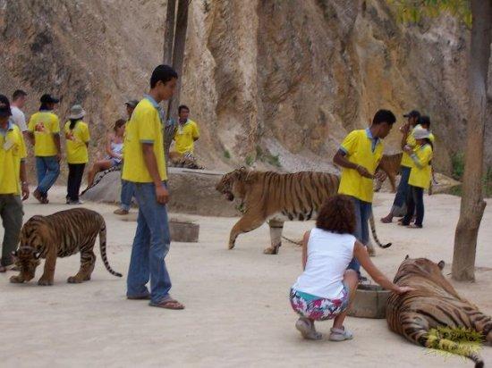Это Храм Тигров в Бангкоке .