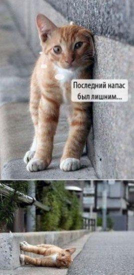 Нетленная кошачья тема