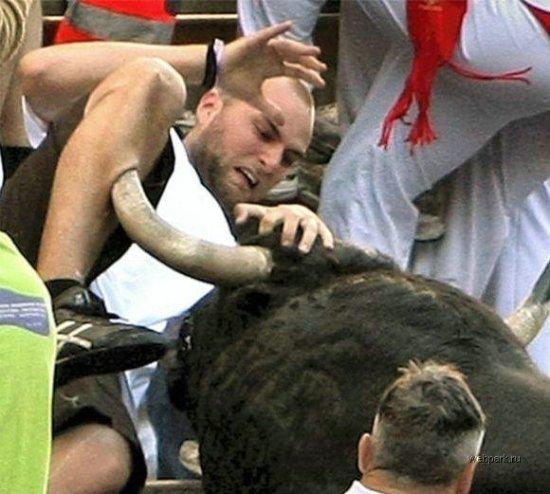 Иногда побеждает бык