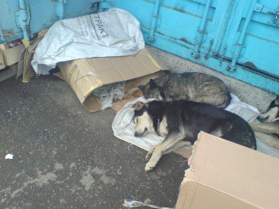 Собачки на ЖдановичАх