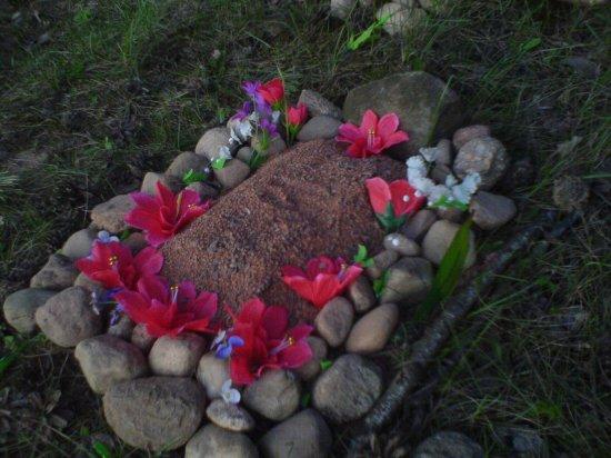 Кладбище животных в Минске