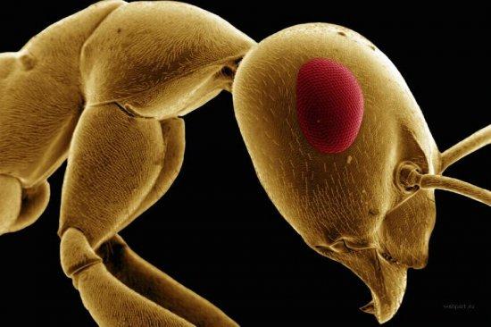Под микроскопом