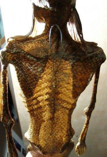 Очередная русалка продается на Ebay (6 фото)