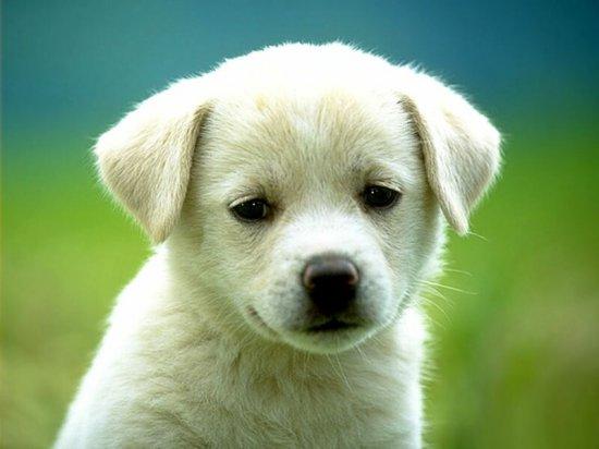 Собачковый позитифф
