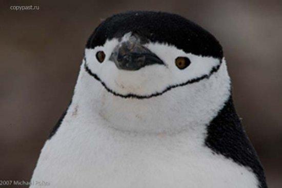 "Michael Poliza ""Антарктика"""