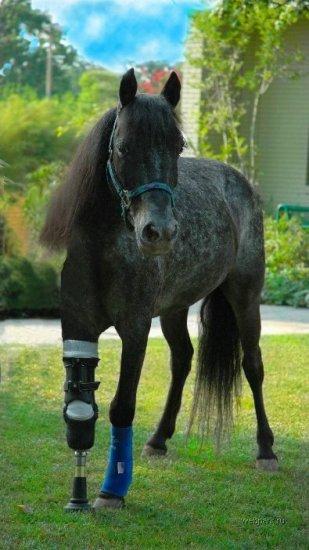 Лошадь на протезе