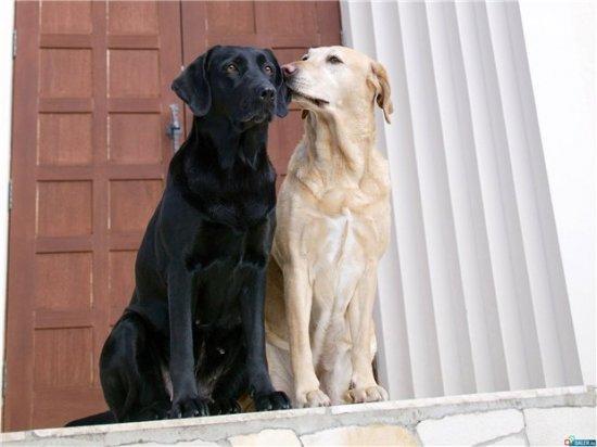 Пара слов о собаках