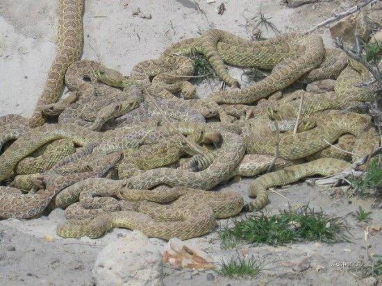 Змеиное гнездо