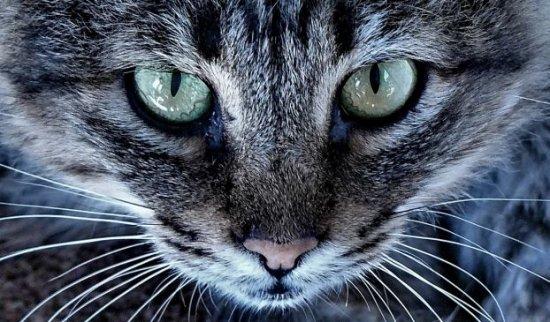 Глаза зверей