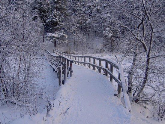 ОБОИ: зима