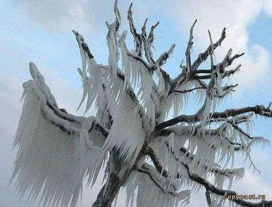 Последствия ледяных штормов