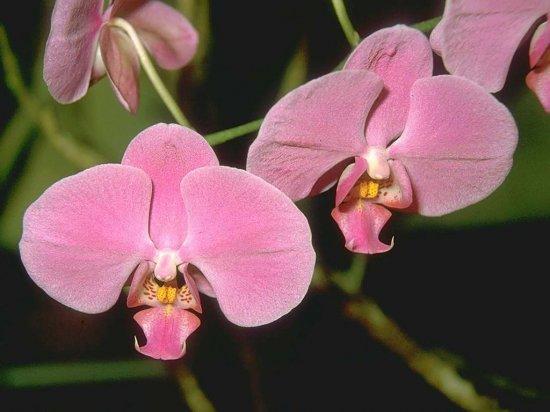 ОБОИ:Цветы
