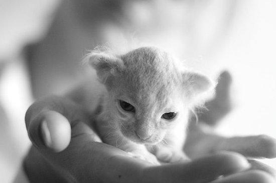 Уматовые котята