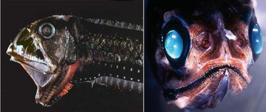 Самые необычные морские существа. Часть 1