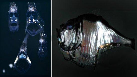 Самые необычные морские существа. Часть 2