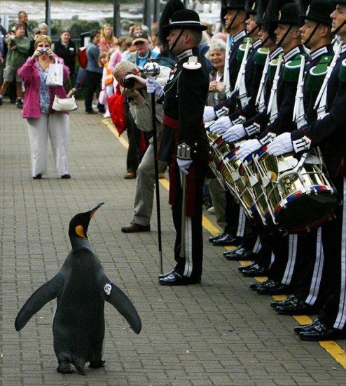 Королевский пингвин Нильс Олаф III из Эдинбургского зоопарка возведен в рыцарское звание