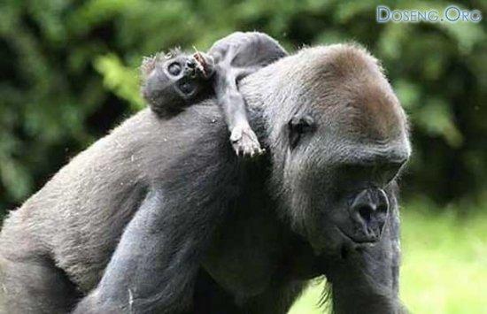 Печальный случай в немецком зоопарке