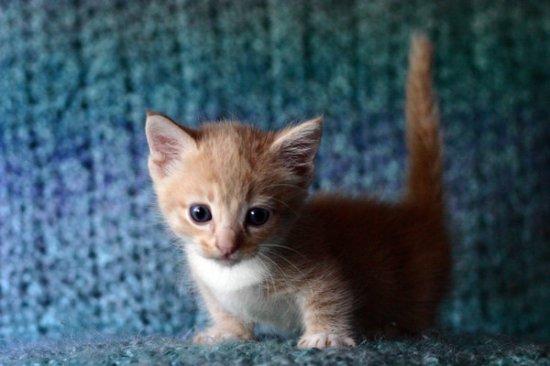 Котики (часть 2)
