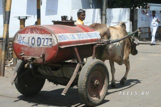 Как в Индии перевозят нефть?