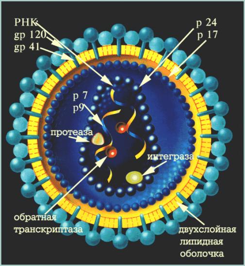 Открыт способ лечения больных ВИЧ/СПИД