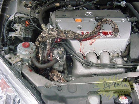 В моторе  что-то подозрительно шипело...