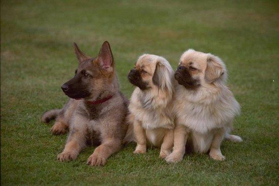 Собачки (2 часть)