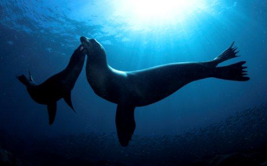 Подводный мир (продолжение)