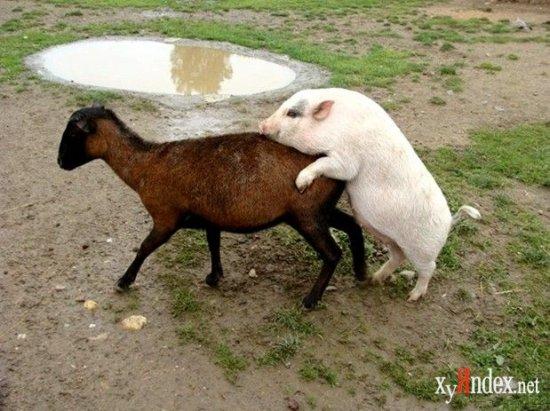 Прикольные фото с животными