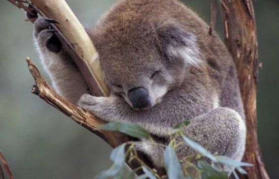Спать всем хочется