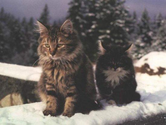 Интересные факты из кошачьей жизни