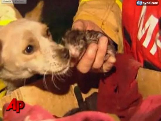 В Австралии щенок рисковал жизнью, спасая котят от огня