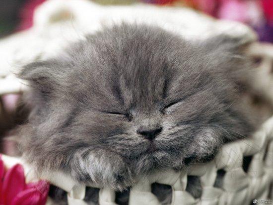 Спят усталые котята...