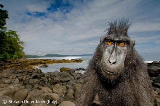 Лучшие фотографии дикой природы 2008