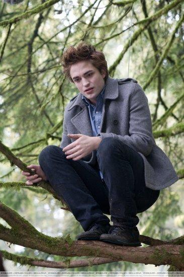 Twilight: кадры из фильма  и не только