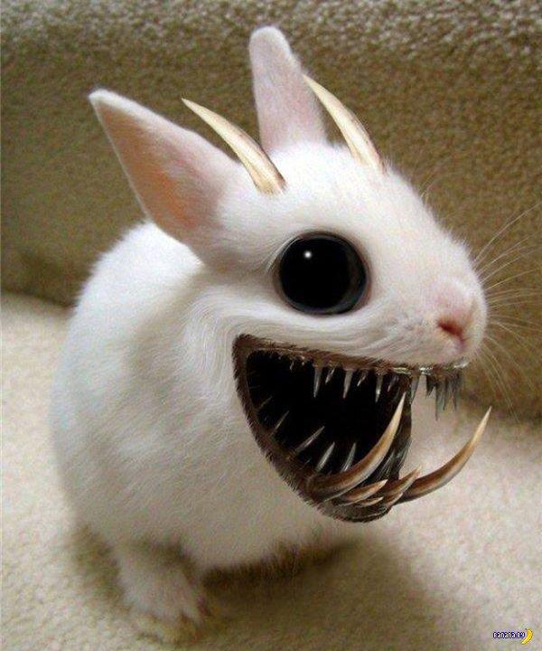 Фото, картинка кролик прикол